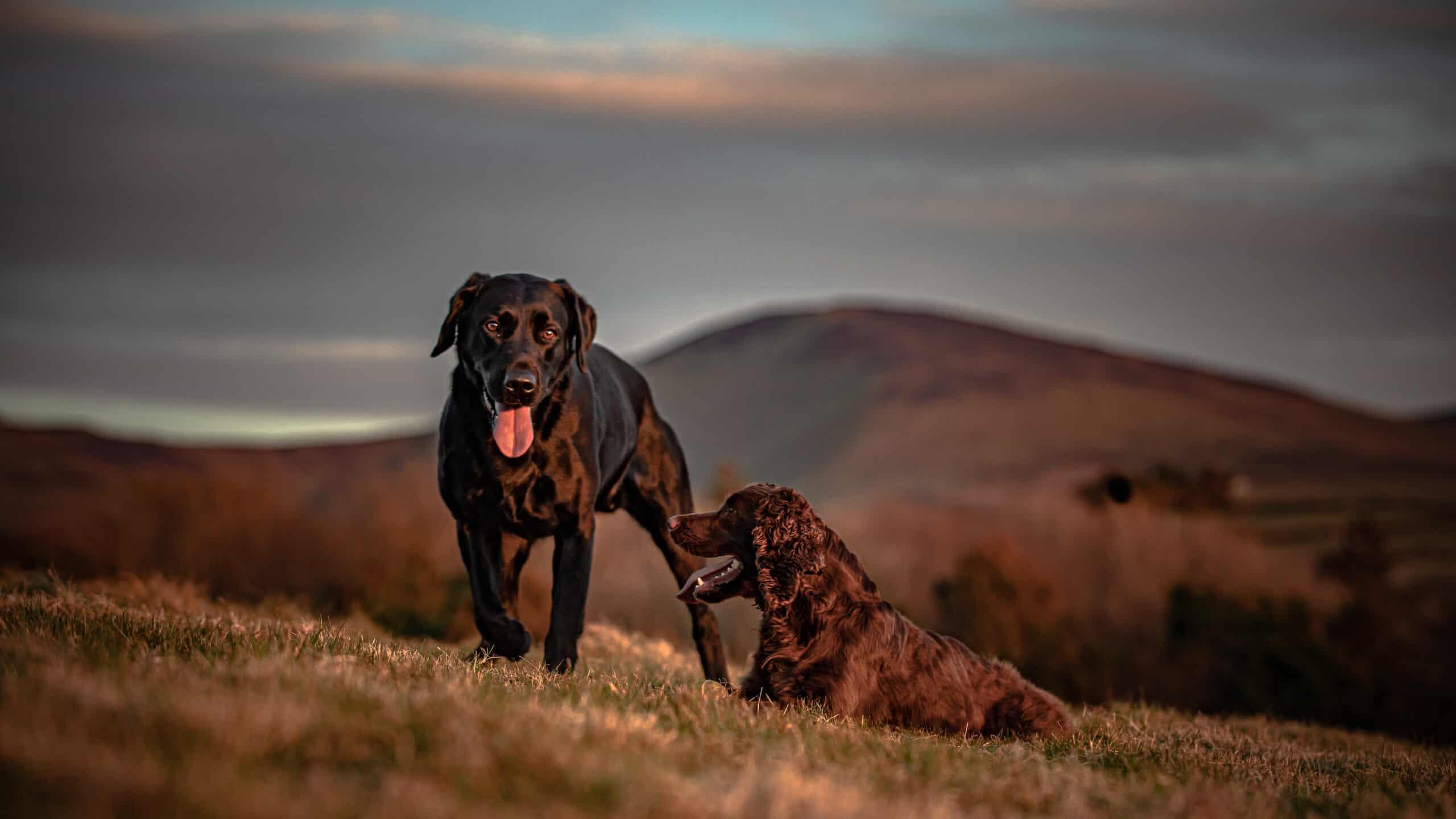 happy dogs on hillside